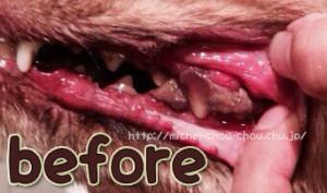 歯石取り 歯磨き 犬