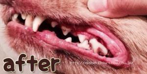 歯石 犬 口臭