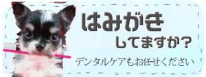 横須賀市 犬 無麻酔歯石除去