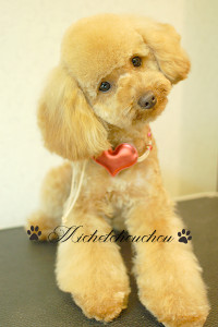 犬の美容院 横須賀市