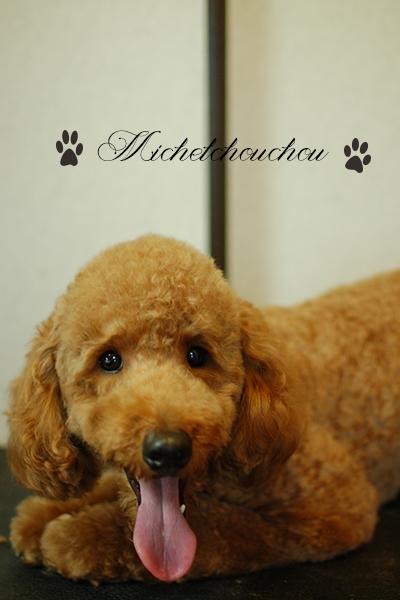横須賀市犬の美容