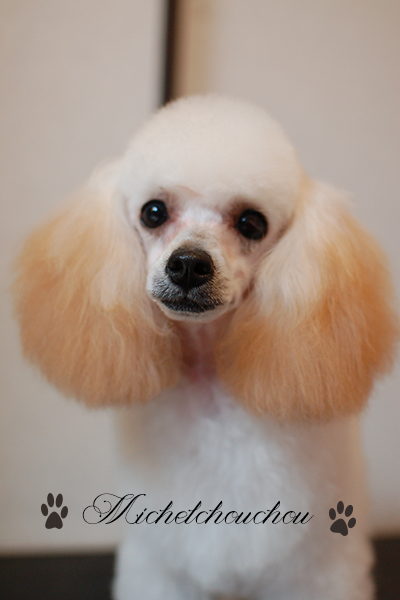 Dog grooming salon Yokosuka