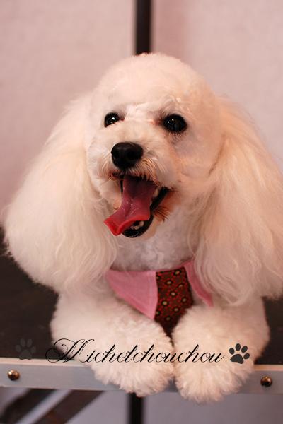 Pet grooming salon Hayama