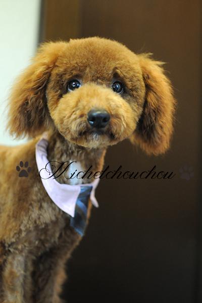 Yokosuka Dog grooming