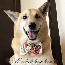 横須賀トリミング 犬の美容 みしぇるしゅしゅ なつちゃん